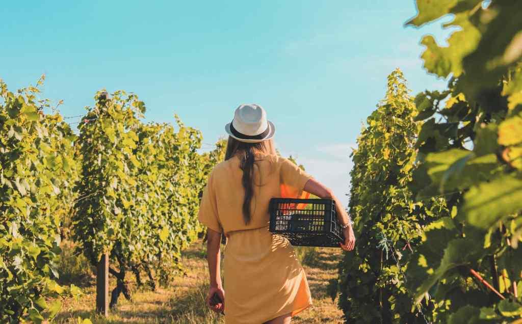Slow Tourisme dans les vignes Bordelaises en Wwoofing